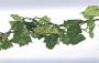 Girlanger Vinbladsranka 170 cm