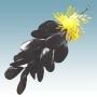 Figurer Knippe musslor 30 cm