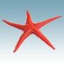 Figurer Sjöstjärna 28 cm