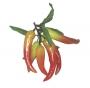 Frukt Chilipeppar i klase 15 cm 2st