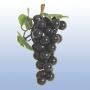 Dekorfrukt Vinranka