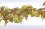 Girlanger Murgrönsgirlang Höst 180 cm